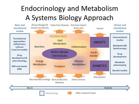 Endocrinology and MetabolismA Systems Biology Approach